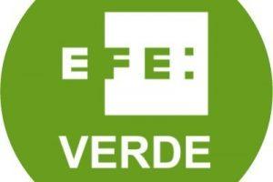EFE Verde